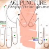 Pancreas quantify with micro-acupuncture TriOrigin